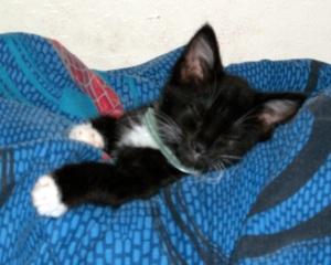 Sox the kitten