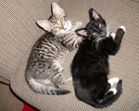 Meet our new kitties - Stripes & Sox!