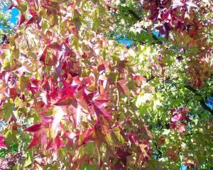 """Fall Walk"""
