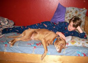 """Our sweet family dog """"Delli"""" needs a home!"""